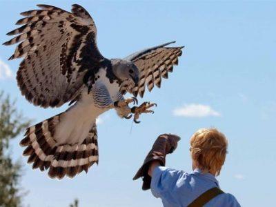 นกอินทรีฮาร์ปี้ ราชาแห่งนกนักล่า ที่ทั้งท้องป่าต้องเกรงกลัว